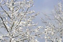 Orario invernale dei rami di albero coperti di neve Immagini Stock