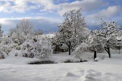 Orario invernale del giardino con gli alberi coperti di neve Immagine Stock Libera da Diritti