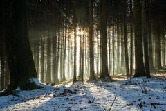 Orario invernale della foresta Fotografia Stock Libera da Diritti