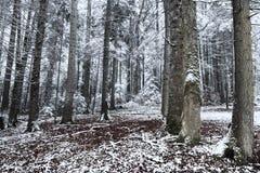 Orario invernale dentro la foresta un giorno nebbioso Fotografie Stock Libere da Diritti