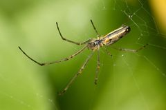 Orb Spider Stock Photography