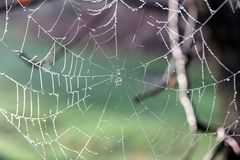 Spiderweb at Sunrise Covered in Dew Drops stock images