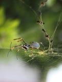 Orb spin en zijn gouden Web royalty-vrije stock fotografie