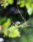 Orb spin op zijn gouden Web stock afbeeldingen