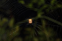 Orb Weaver Spider royalty-vrije stock fotografie