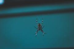 Orb Weaver Spider in dark home setting Stock Photo