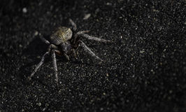 Orb Weaver Spider Stock Image