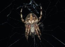 Orb Weaver Spider On Its Web på natten arkivfoto