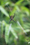 Orb-weaver spider Stock Photography