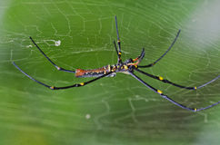 Orb-web spider. In the parks Royalty Free Stock Image