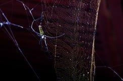 Orb Webs Argiope Spider Stock Photos