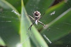 Orb wever in Web stock foto's