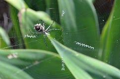Orb wever in Web Royalty-vrije Stock Foto