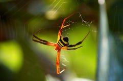 Orbe asiático Weaver Spider del Argiope en el web Fotografía de archivo