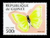Orbed硫磺(Phoebis orbis),蝴蝶serie,大约1998年 免版税库存图片