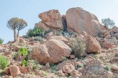 Orbicular granit på den Orbicular kullen nära Concordia Arkivfoto