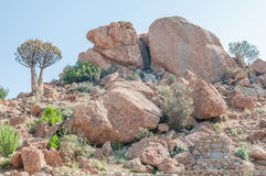Orbicular granite at Orbicular Hill near Concordia Stock Photo