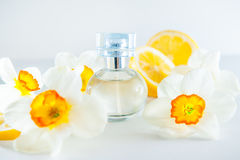 Orbicular perfume bottle surrounded by fresh Daffodils flowers and lemon slices isolated on white background. Yellow colour concep Royalty Free Stock Images