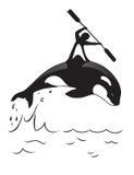 Orca και άτομο Στοκ Εικόνες
