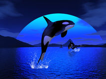 Orca 1. 3d render of Orca 1 Royalty Free Stock Images