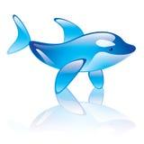 Orca Stock Image