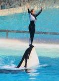 Orca Immagine Stock