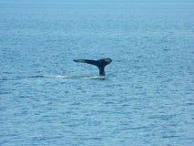 Orca Imagenes de archivo