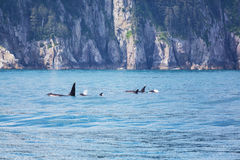 Orca Στοκ φωτογραφίες με δικαίωμα ελεύθερης χρήσης