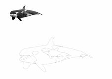 Orca coloring page. With sample in the upper left corner Stock Photo