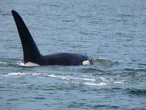 Orca de la costa canadiense Imagen de archivo libre de regalías
