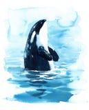 Orca de la orca en el ejemplo de la acuarela del agua pintado a mano ilustración del vector
