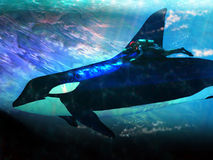 Orca and diver Royalty Free Stock Photos