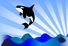 Orca do Orcinus Imagens de Stock Royalty Free