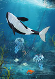 Orca II Royalty Free Stock Photo