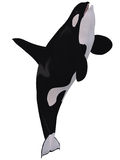 Orca - Killer Whale. 3D Render of an Orca - Killer Whale Royalty Free Stock Photo