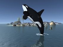 Orca - Killer Whale. 3D Render of an Orca - Killer Whale Royalty Free Stock Images