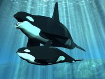 Orca - Killer Whale with Calf. 3D Render of an Orca - Killer Whale with Calf Royalty Free Stock Photography