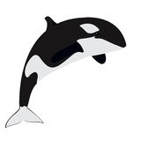 Orca - killer whale. Vector illustration. great as logo element Royalty Free Stock Photos