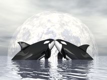 Orca love - 3D render Stock Photos
