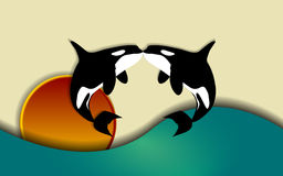 Orca love. Orcinus orca, Killer whale jumping and kissing in sunset, vector illustration Stock Images