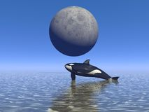 Orca and moon. And sea Royalty Free Stock Photos
