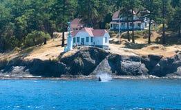 Orca near the coast Stock Images