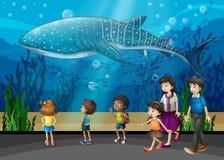 Orca nell'acquario royalty illustrazione gratis