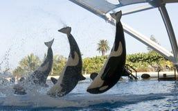 Orca ocean Stock Photo