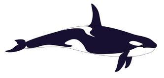 Orca realistica su un fondo bianco Immagine Stock Libera da Diritti