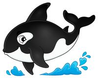 Orca theme image 1. Eps10 vector illustration Stock Image