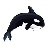 Orca vector illustration. Marine mammal. Killer whale.  on white background. Orca vector illustration. Marine mammal. Killer whale.  on white background Royalty Free Stock Photo