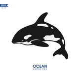 Orca whale. Black and white orca whale  on white Stock Photo