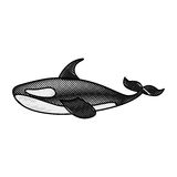 Orca whale isolated icon. Vector illustration design Royalty Free Stock Images