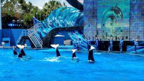 Orca whales sea world Stock Photo